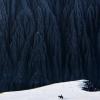 大山下的雪