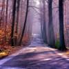 美丽的森林小路