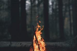 森林里的火