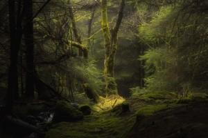 幽静的绿色树林