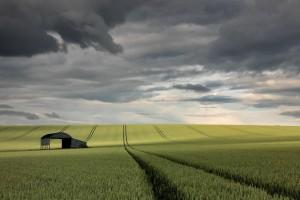 乌云与麦田