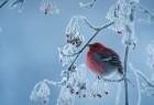 雪中的小鸟