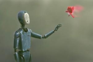 机器人与鸟