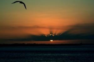 黄昏中飞行的海鸥