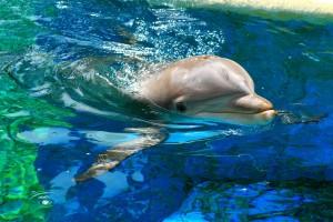 水中的海豚