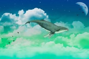 天空中的鲸鱼