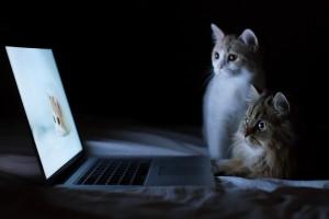 看电脑的猫咪