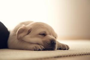熟睡的狗狗