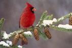红色的小鸟