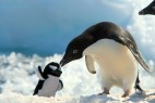 企鹅玩玩具