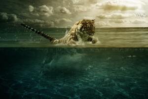 在大海里的老虎