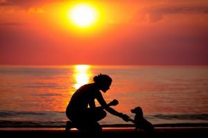 黄昏的沙滩狗与人