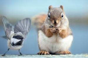 松鼠和小鸟
