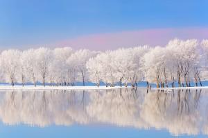 白色树林风景