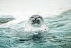 海狮或者海豹