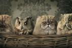 小猫咪与猫头鹰
