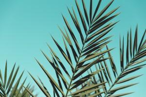 蓝色棕榈树