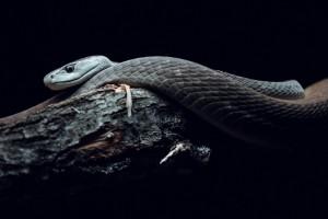 不知名品种的蛇
